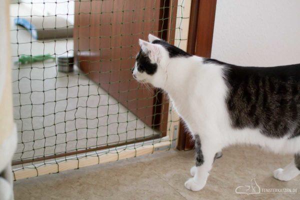 Fensterkatzen-Das-Erste-Mal-Katzen-Zusammenfuehren-Unsere-Erfahrungen-Flash-Gittertuer