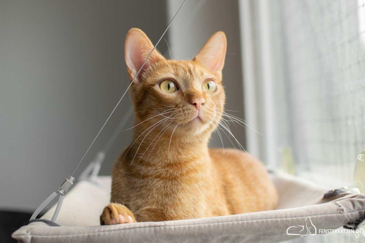 Fensterkatzen-Das-Erste-Mal-Katzen-Zusammenfuehren-Unsere-Erfahrungen-Kater-Fensterliege