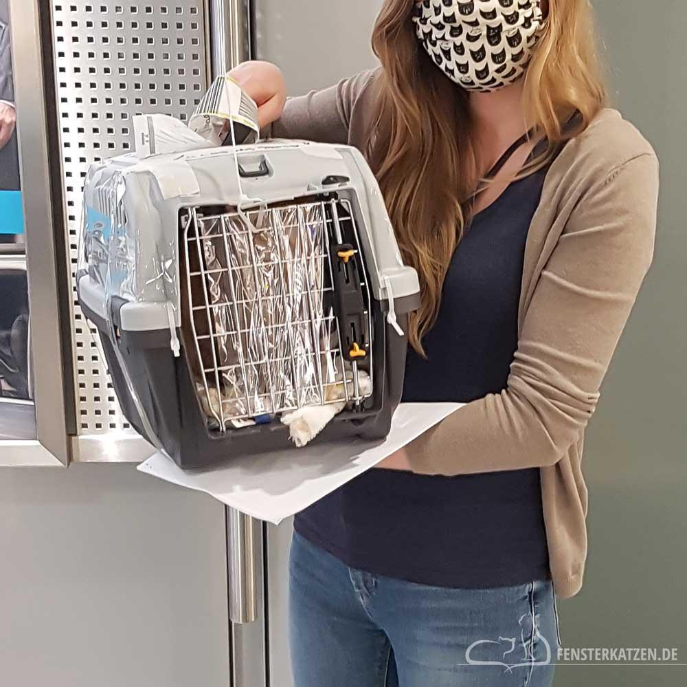 Fensterkatzen-Das-Erste-Mal-Katzen-Zusammenfuehren-Unsere-Erfahrungen-Transportbox