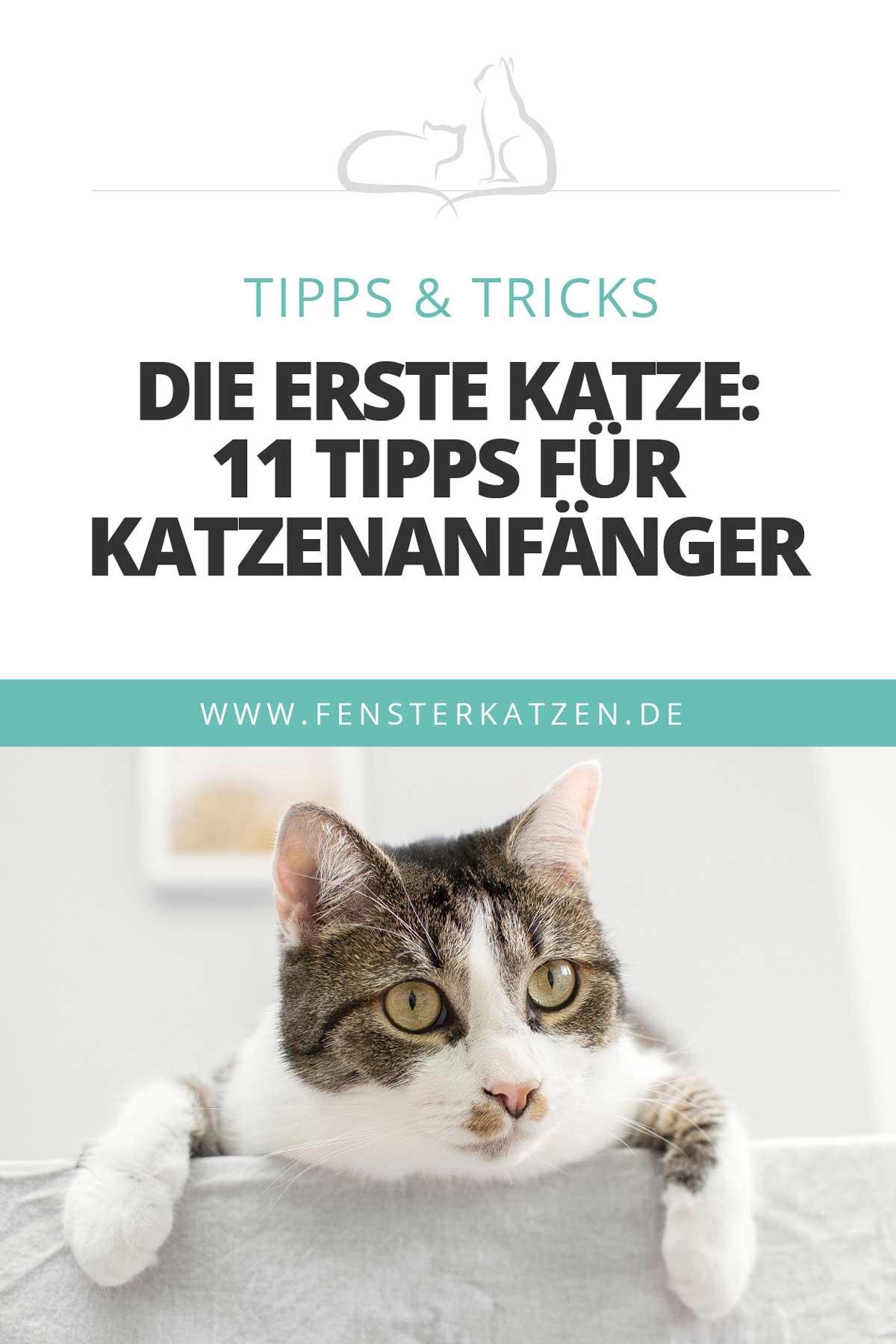 Fensterkatzen-Katzenblog-erste-Katze-Tipps-fuer-Katzenanfaenger-Pinterest