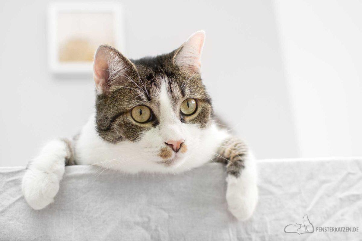 Fensterkatzen-Katzenblog-erste-Katze-Tipps-fuer-Katzenanfaenger-Titelbild