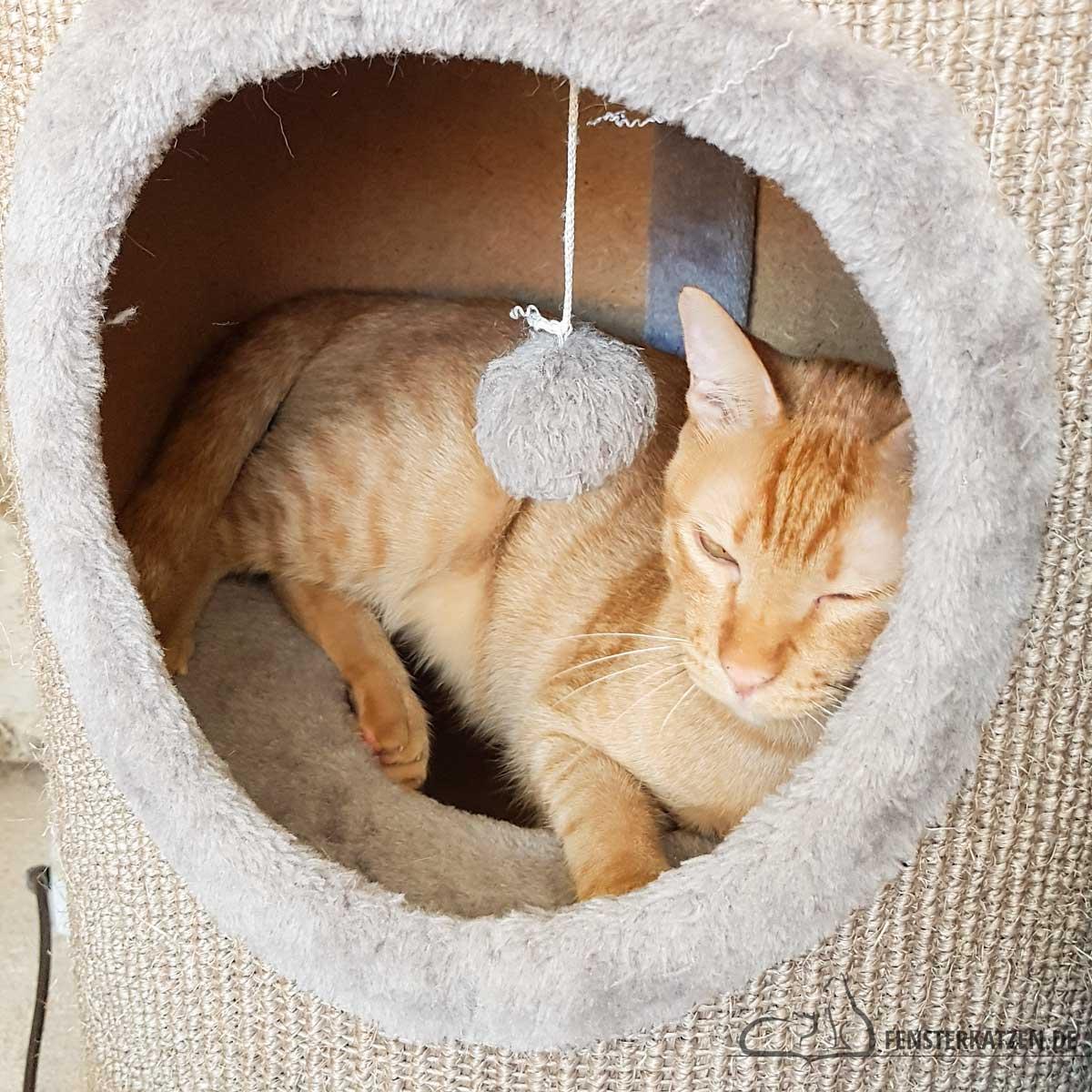 Fensterkatzen-Das-Erste-Mal-Katzen-Zusammenfuehren-Unsere-Erfahrungen-Luke-Kratztonne-Wohnzimmer