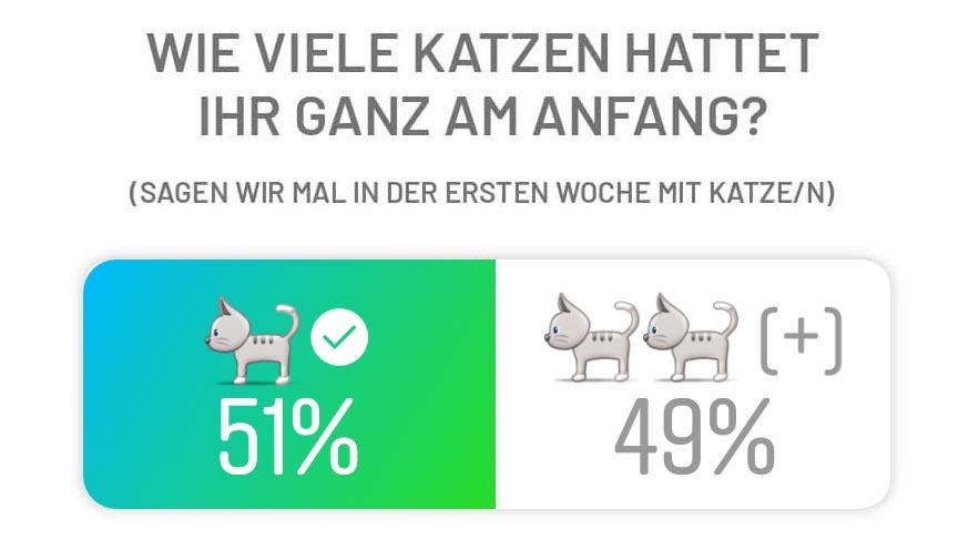 Fensterkatzen-Eine-Oder-Zwei-Katzen-Umfrage-Instagram-Wie-Viele-Katzen-Am-Anfang