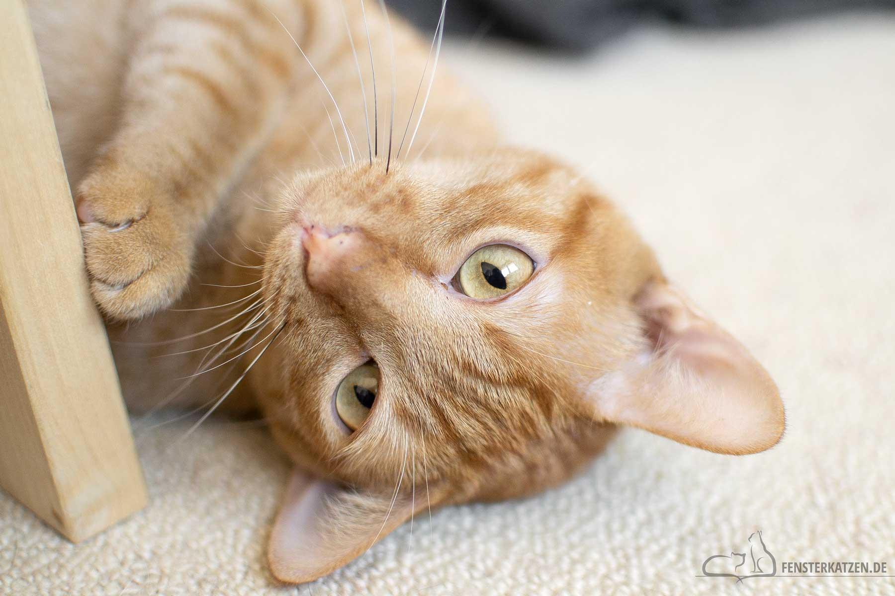 Fensterkatzen-Warum-Kastration-bei-Katzen-wichtig-ist-Titelbild