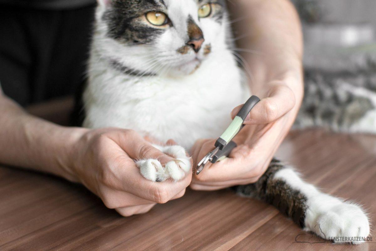 Fensterkatzen-Ratgeber-Katze-Krallen-Schneiden-Ja-oder-Nein-Titelbild
