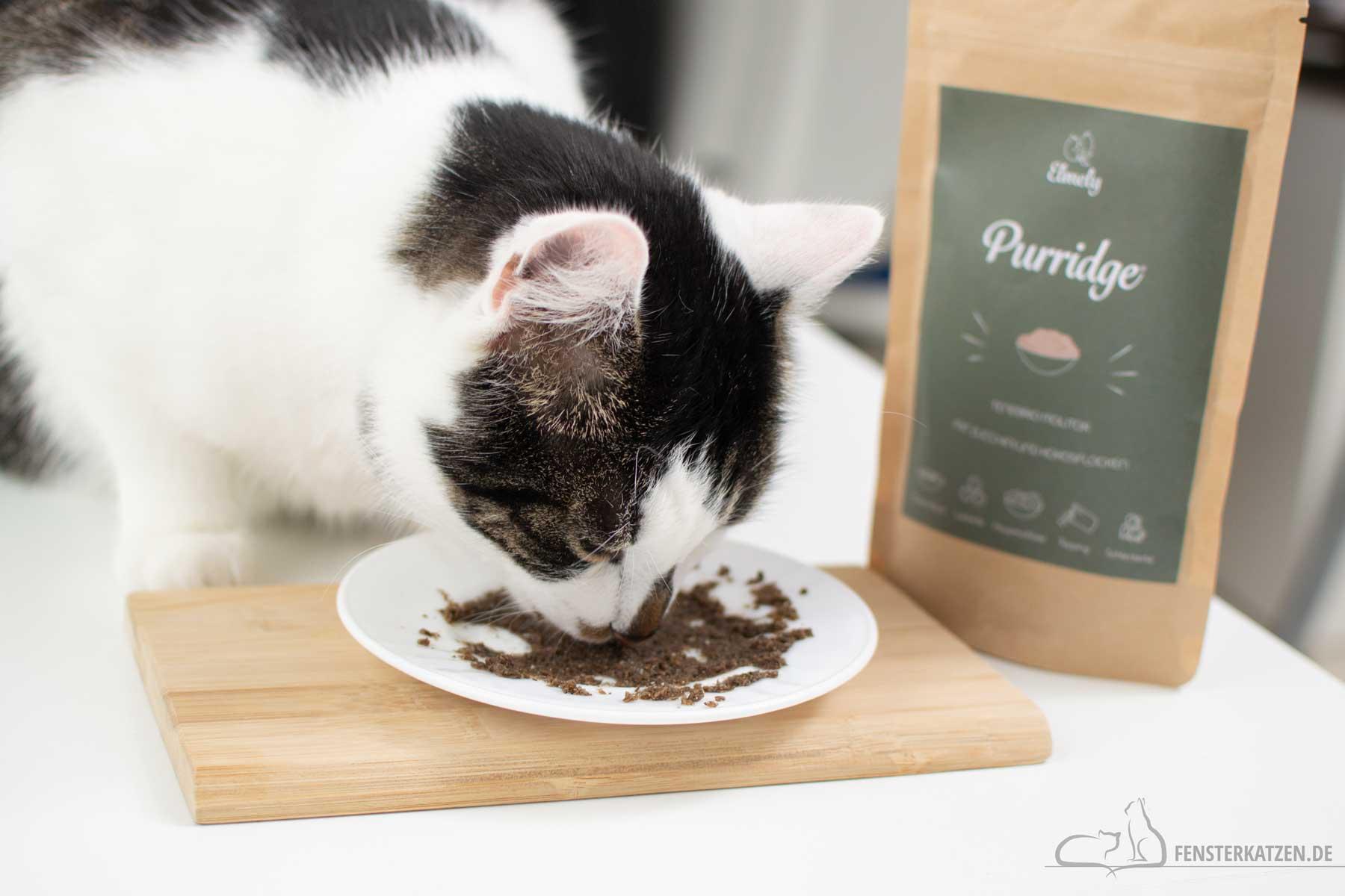Fensterkatzen-Katzenblog-Getestet-Insekten-Katzenfutter-Purridge-Elmely-Kater-frisst