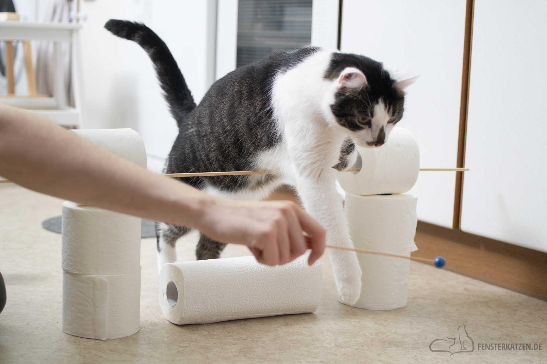 Fensterkatzen-Katzenblog-Cat-Agility-Hindernisparcours-Huerde-Klopapierrollen-hoeher